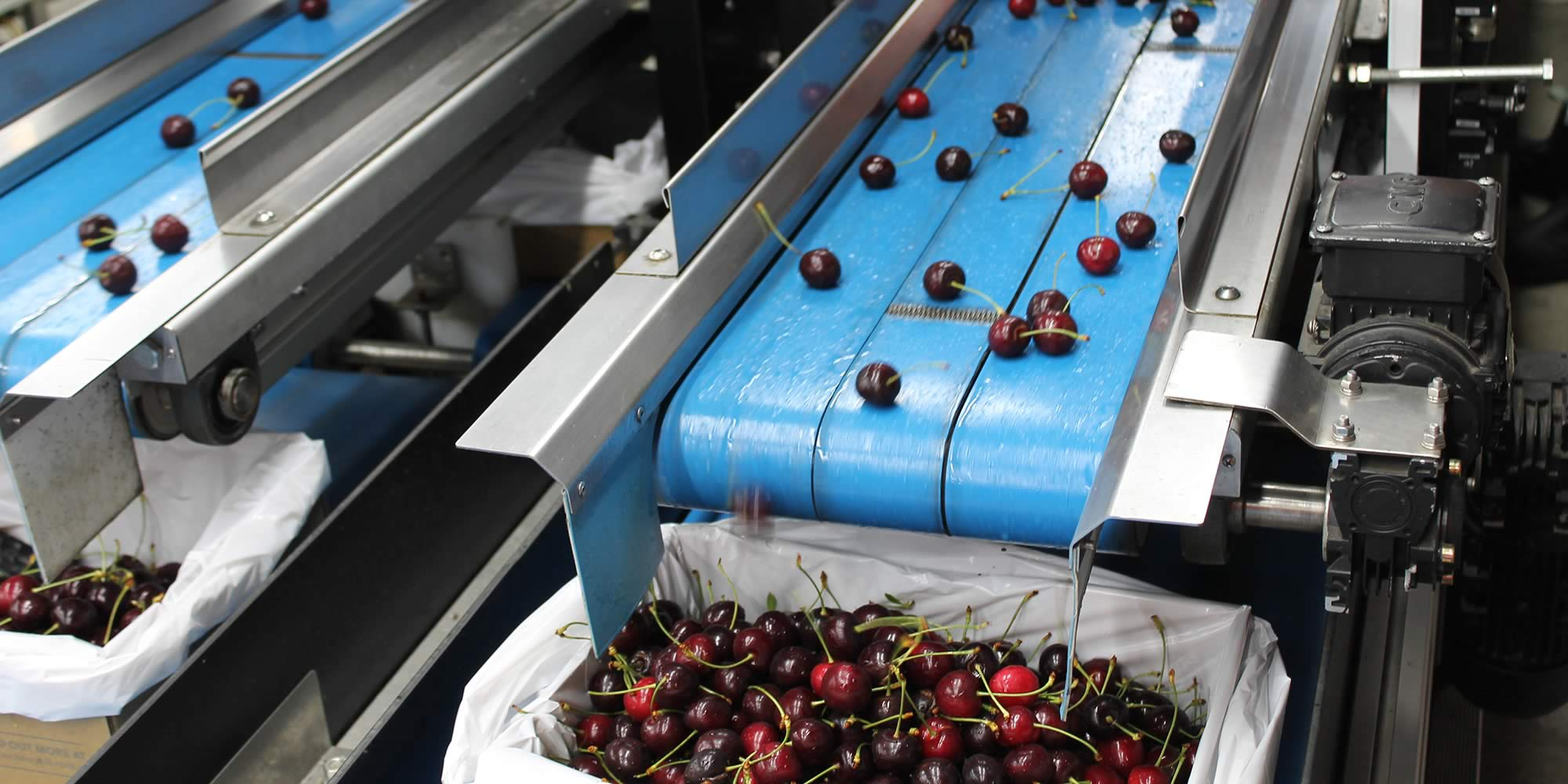 Slide - Cherry sorting